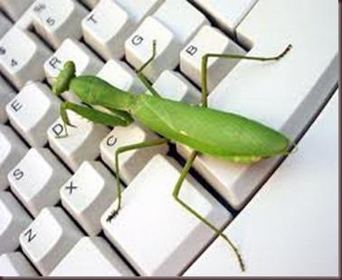 Amazing Pictures of Animals photo Nature exotic funny incredibel Zoo Mantis Arthropodo Insect. Alex (8)