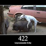 422.jpg