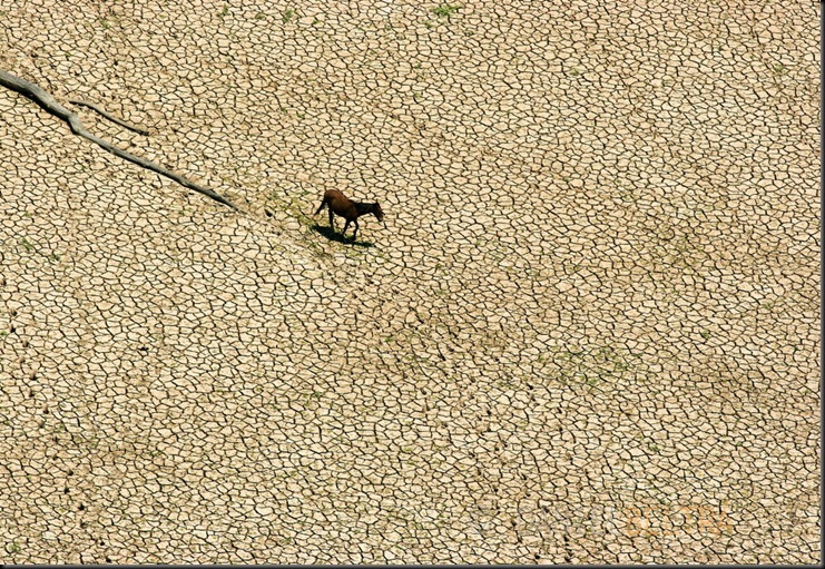 The Curuai lake is almost completely dry during one of the worst droughts ever recorded in the Amazon region. Para State, Brazil.<br />