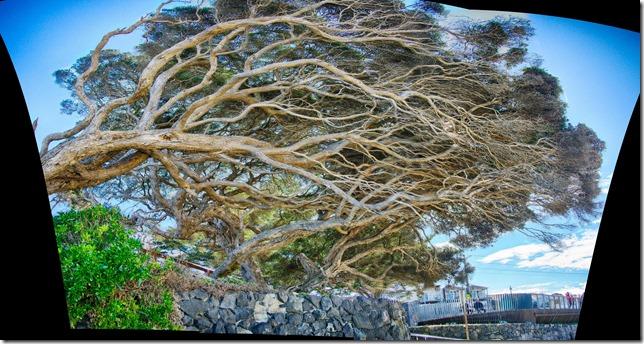 tree hdr pano big-001