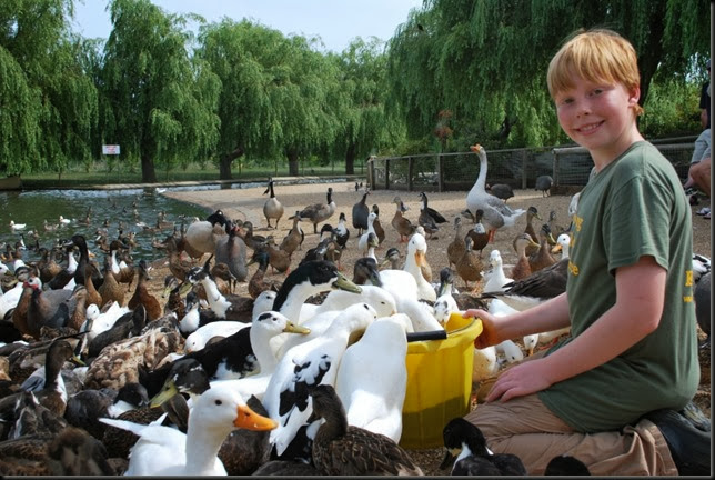 Charlie feeding the ducks