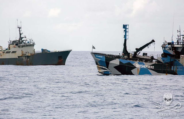 The 'Bob Barker' in a high-seas stand-off with poaching vessel 'Thunder', which has now been stripped of its registry by former flag-state, Nigeria. Photo: Giacomo Giorgi / Sea Shepherd Conservation Society