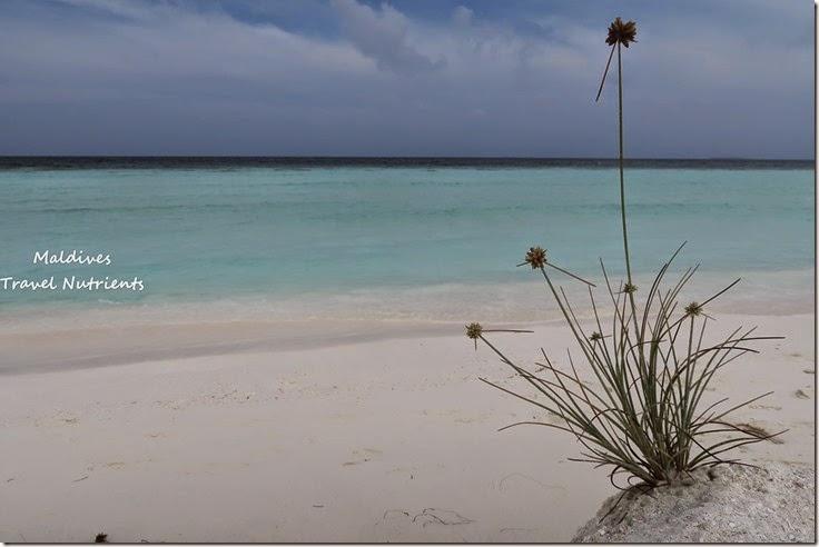 馬爾地夫 野餐島 浮潛 (45)