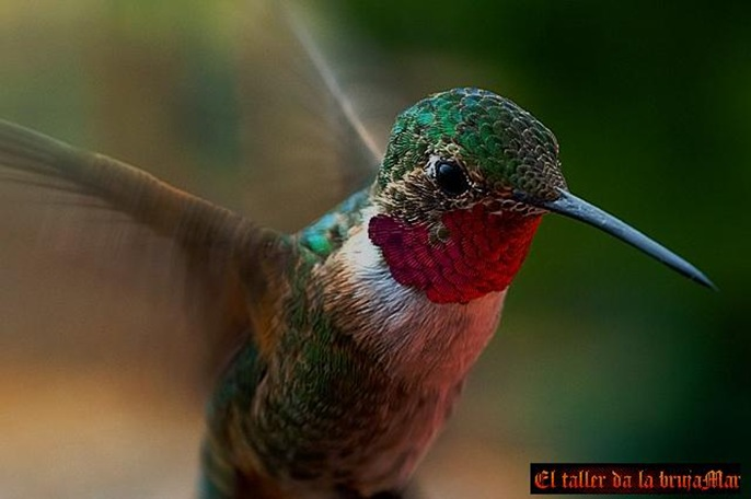 Aves-ElTallerDelabrujaMar-junio0604