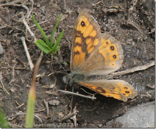 8-wall-butterfly