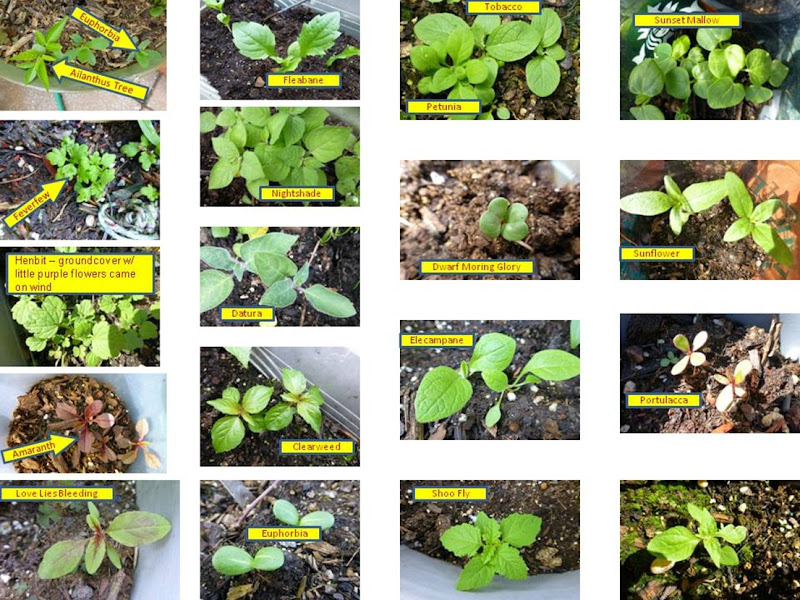 2014 Seedlings