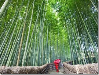 Bambuzal de Arashiyama, no Japão