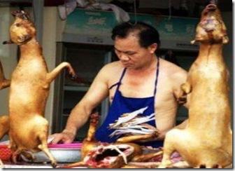 china- caini sacrificati