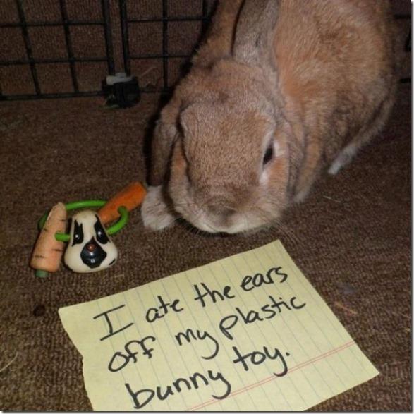 bunny-rabbit-shaming-3