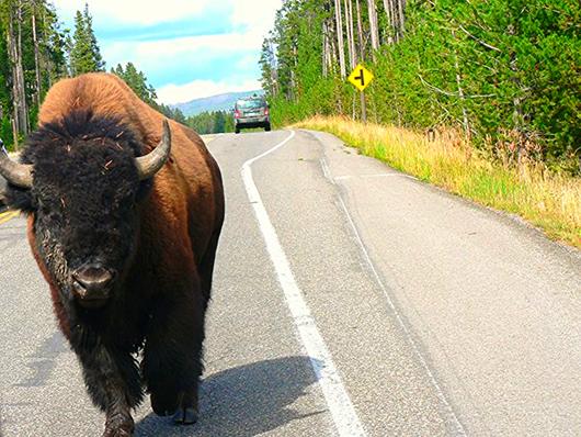 Yellowstone 134.JPG