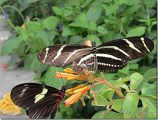 LG_Silver_Longwing2