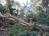 CLambering over a fallen tree on the trail up Ili Ujolewung (Dan Quinn, July 2013)