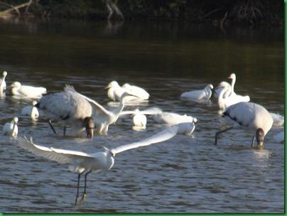 Eco Pond 063