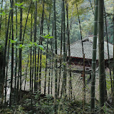 Emeishan - temple in the bambou jungle