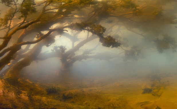 kim keever 8