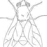 house-fly-coloring-page-1.jpg