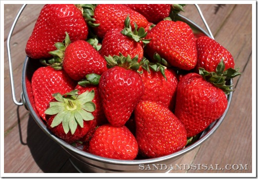 strawberry bucket, galvanized pail with strawberries, strawberries