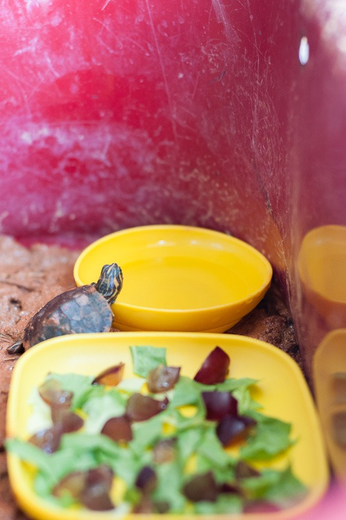 Turtle in wagon blog-1