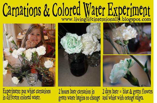carnation science experiment for kids