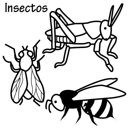 Dibujos de insectos para colorear - Fotos de insectos para imprimir ...
