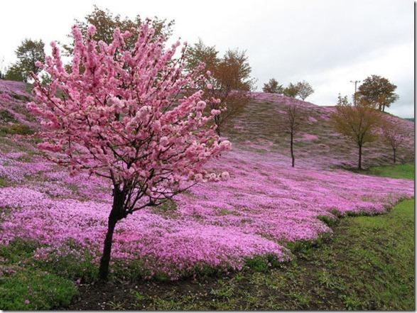 pink-park-japan-1