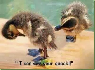 quack_zps85a0f7b0
