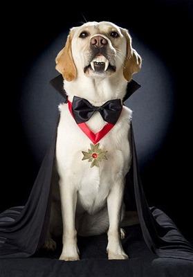 perros vampiro 1 2 (1)