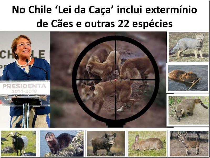 Chile Lei da Caça