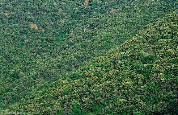 El Titllar,Bosc de Poblet (Paratge Natural d'Interés Naciona), Muntanyes de Prades,Vimbodí, Conca de Barberà, Tarragona