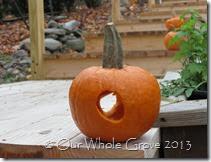 circle pumpkin