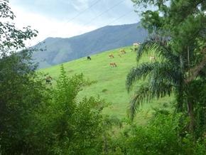 Pousada Encanto Bocaina - Sao Jose Barreiro (SP) 2012 (14)