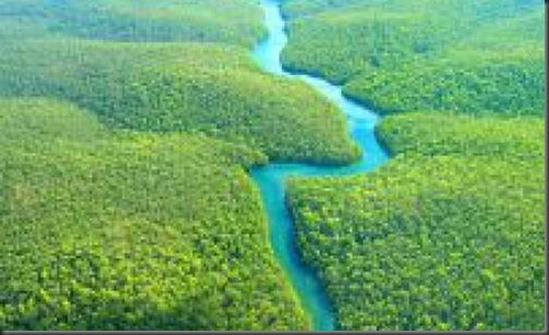imagini padurea amazoniana