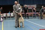20130510-Bullmastiff-Worldcup-0682.jpg