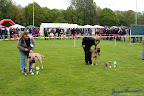 20100513-Bullmastiff-Clubmatch_31110.jpg