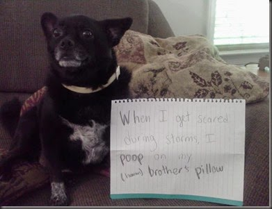 bad_dogs_publicly_shamed_640_16