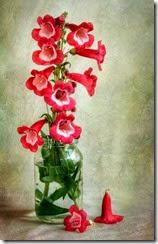 flores vermelhas no vidro