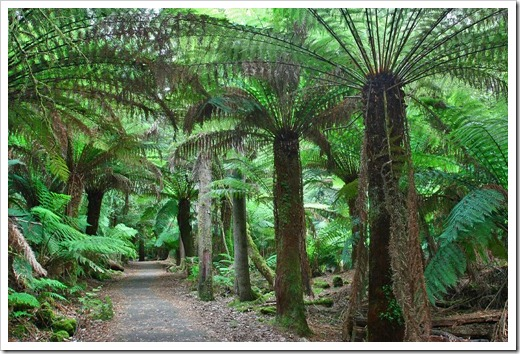 100103_Mt-Field-National-Park,-Tasmania_138