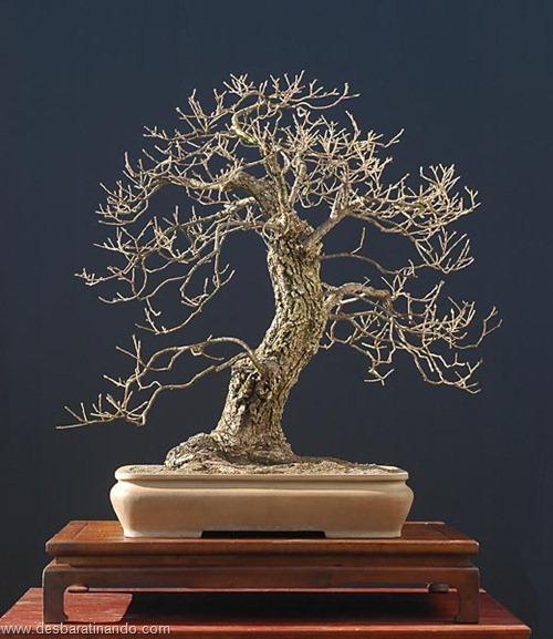 bonsais arvores em miniatura desbaratinando (16)