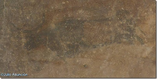 Toro - pintura rupestre de la roca de los moros - Cogul
