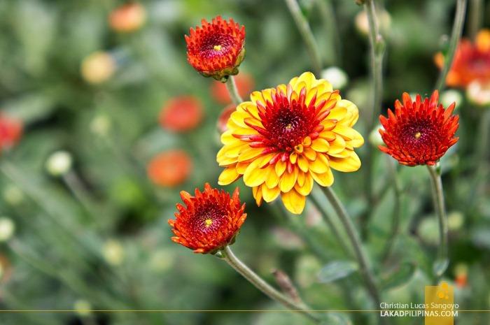 Flower Galore at Baguio City's Orchidarium