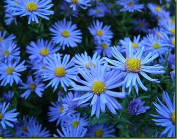 blaue-blumen-44421286908883jJXs