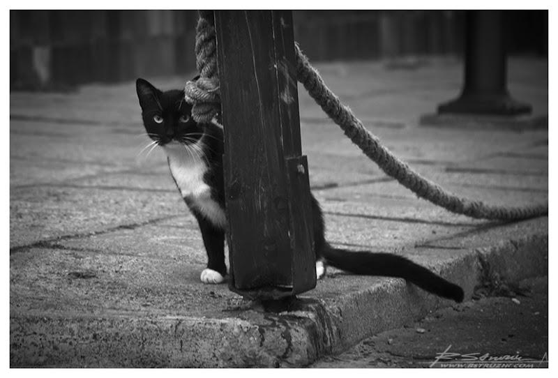 Hel. Ciekawski kot kontrolował rozwój sytuacji... i pozował turystom.