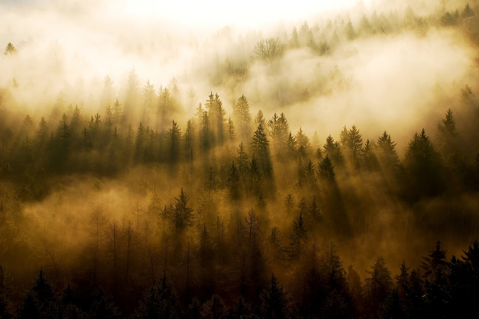 Looking towards the light. The edged treeline stands up from the morning mist in Saechsische Schweiz, Germany.