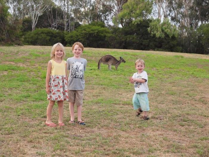 virtù - kangaroos