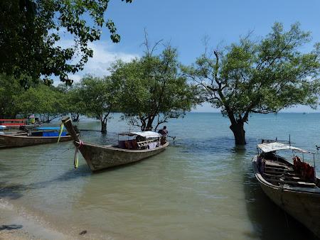Tarmuri cu mangrove: Railay East Beach