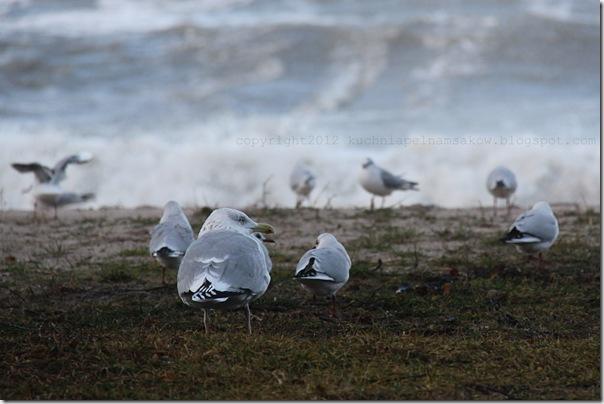 Styczniowe morze i bułeczki z zurawiną i marcepanem (3)