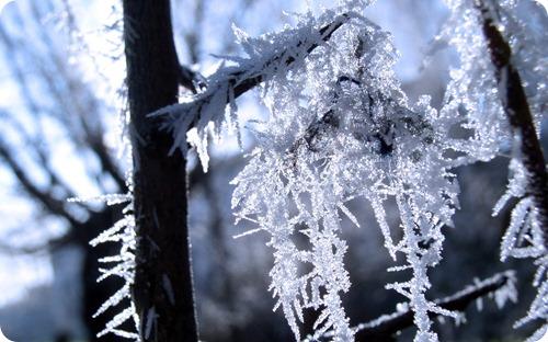 winter-of-wallpaper (1)