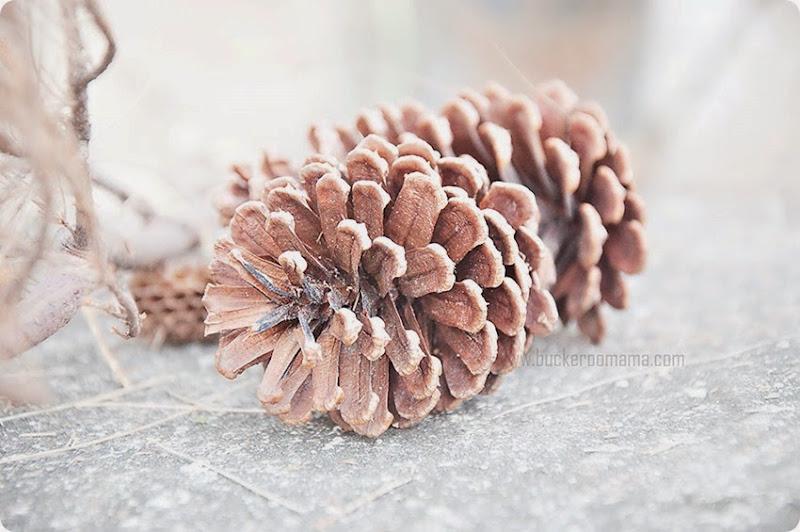 Pine-cones-(1)