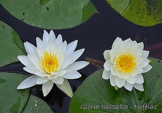 Glória Ishizaka - flores 101