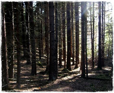 9 skogen